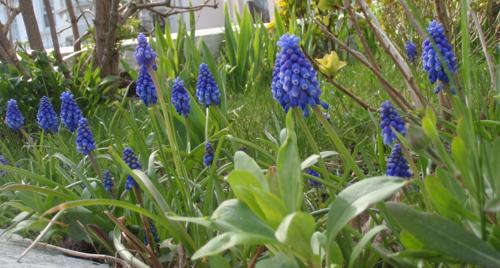 Spring 2013 001